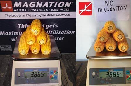 افزایش و بهبود بازده کشاورزی با استفاده از آب مغناطیسی با میزان کمتر نسبت به آب معمولی