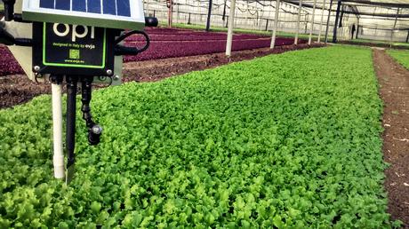 افزایش بازده با استفاده از سنسور ها در کشاورزی هوشمند